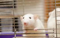 Регенерация нервных волокон позволит восстановить зрение