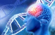 Вирус простуды повышает выживаемость при раке головного мозга