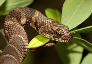 Яд змеи способен вылечить рак?